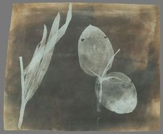 varia #photogram #william #henry #fox #talbot