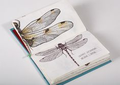 Le mond des insectes / ESAG Penninghen, Paris on the Behance Network #insect #drawings