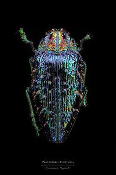 Entomology: Macro Portraits of Insects by Francesco Bagnato