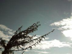 LA, 2012. #losangeles #sky #malibu #USA #cityscape