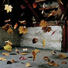 Autumn leaves hanging by invisible thread #photography #art #installation
