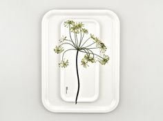 Identity | Stockholm Design Lab #flower #tray #lab #stockholm