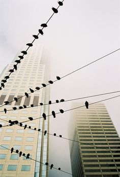 Tumblr #photo #city #fog #birds #scycscrapers