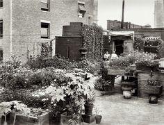 Shorpy Historical Photo Archive :: Urban Eden: 1908 #urban #garden