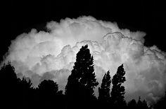 Más tamaños | fuerza natural | Flickr: ¡Intercambio de fotos! #forest #nature #architecture #landscape