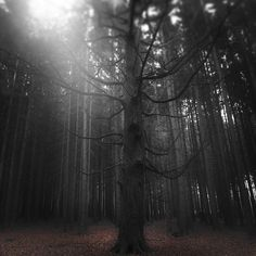 Forest on the Behance Network