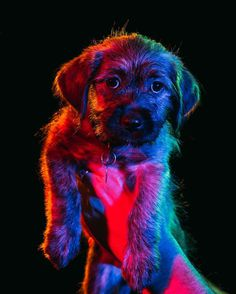 Since I can't draw, I can paint with light! This is me turning puppies into my very own Lisa Frank rainbow illustrations 🌈🐶 #prismatic