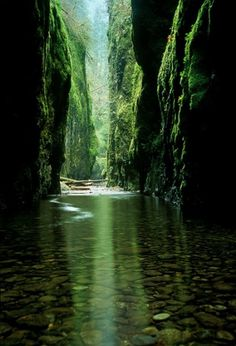 QBN - Pic of the Day #oneonta #gorge #portland #usa #river
