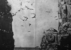 cнoкiиg oи dusт #birds