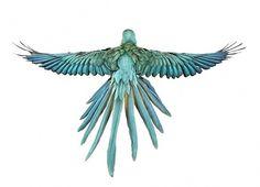 Andrew Zuckerman 'Bird' Series | Trendland: Fashion Blog & Trend Magazine #zuckerman #andrew