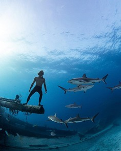 Astonishing Underwater Photography by André Musgrove