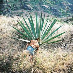 Portrait Photography by Zach McCaffree   Art Sponge #girl #photography #portrait #sun #outdoor #cactus #zach mccaffree