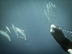 IMG_0155.jpg (800×600) #water #dolphins #iso50 #photography #swim #underwater