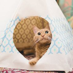Royal Printed Cat Teepee #tech #flow #gadget #gift #ideas #cool
