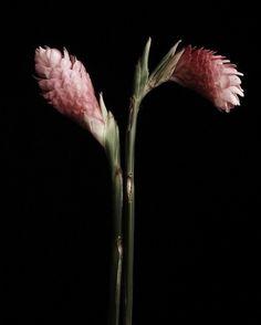 Elke Kramer: Second Nature Thisispaper Magazine #plant