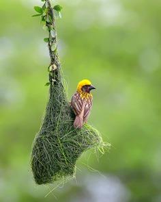 Birds of India: Beautiful Bird Photography by Raj Shelke