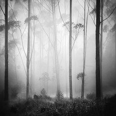 ForestDream, photography by Hengki Koentjoro #forest