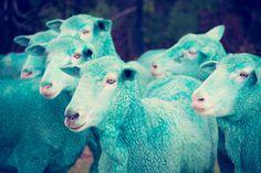 gray malin the dream series rainbow sheep #sheep