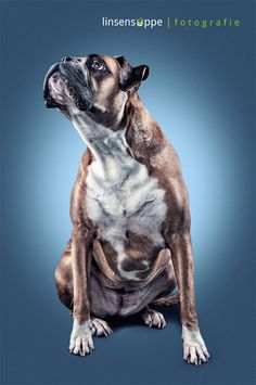 Elegant Dog Portraits Photography by Daniel Sadlowski #Animals #dogs #photography #cuteDog