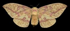 Winged Tapestries #inspiration #photography #macro