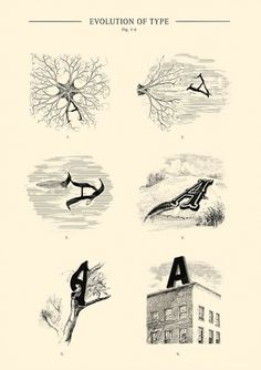 Evolution of Type - Fig. 1-6 #andreas #scheiger