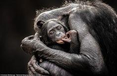 National Geographic 2013 Traveler Photo Contes #inspiration #photography #nature