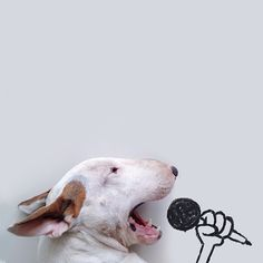 Rafael Mantesso - Bull Terrier Illustrations #photography #dog #microphone #sing #pet #bull terrier #illustration #cute