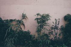 France #dannymaker #dnlkrgr #photography, #fujifilm #france #paris #plants #green #X-T10 #digital