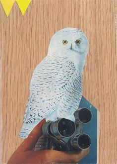 Dan Bina #oak #owl #bina #dan #wood #vintage #collage #paper