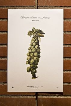 Natural Selection: Restaurant name, Branding and Identity design / The Official Manufacturing Company #catering