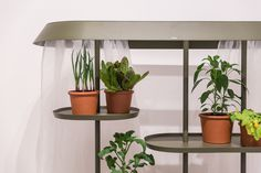 Flatpack Greenhouse