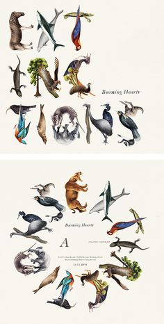 Extinctions: Burnign Hearts Album Cover by Emil Bertell #animals #illustration #typography