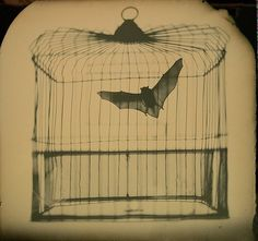 Affaire Mortal, Finch by Phil Nesmith #nesmith #phil #bat #photography #cage #art