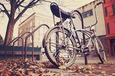 Bike park during Fall