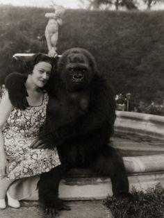 gorilla.jpg (357×475) #gorilla