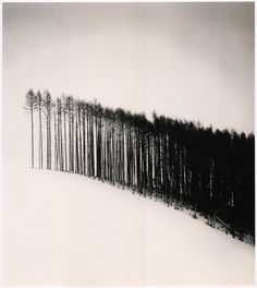 FFFFOUND! | Invisible Stories #print #trees