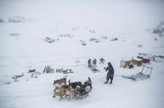 Greenland 16 #photography #dogs #greenland