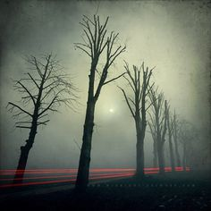 Photos | Midnight-Artwork #forest #fog