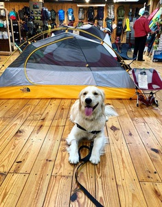 Most Dog Friendly Stores in America - Great Outdoor Provision Co.