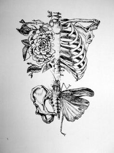 4138fd9787e2825cb0b78938fd889ca560775565_m.jpg (359×480) #skeleton #floral #butterfly #illustration #bones #sketch