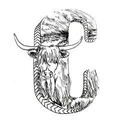 Highland Cow illustration - C  #C #Alphabet #micron #letter #poster #lettering #pen #illustration #cow #highlandcow