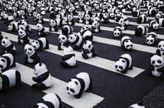Pandas #pandas