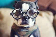 FFFFOUND! #fun #dog