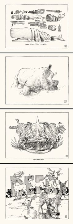 BlackYard » Sketchbook animals_2013 #blackyard #2013 #illustration #animals #pencil