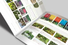 Seracon | WAHBA MEDIA | Graphic Design | Web Development | Branding #catalog #print #eco #green