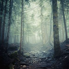 vancouver based photographer andy grellmann #spines #path #mist #photography #pebbles #forest #trees