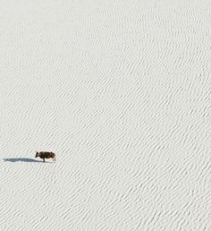 Aerial Photography by Zack Seckler