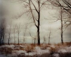 Todd Hido: Excerpts from Silver Meadows [SIGNED] #hido #todd #snow #landscape #rain #photography #trees