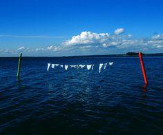 Nina Katchadourian, Intimate Marine Signals