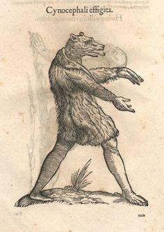 000032 #naturalism #aldrovandi #illustration #latin #ulisse #drawing